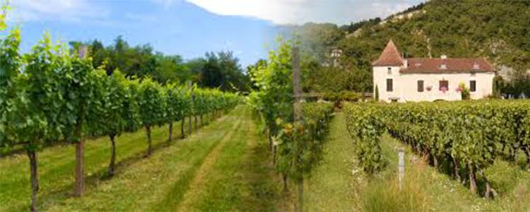 Blended Vineyard Banner